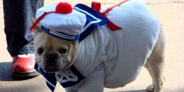 costumes de chiens ne sont pas seulement pour Halloween plus