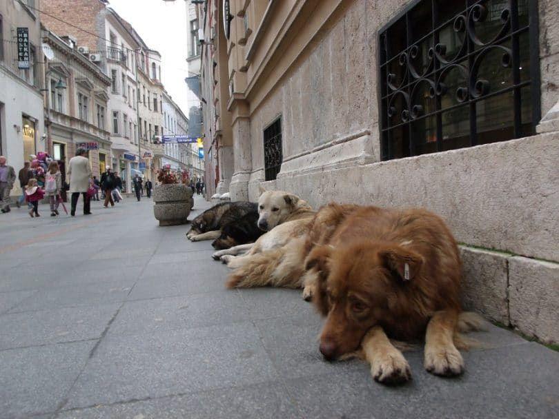 Chien abandonment- chiens errants