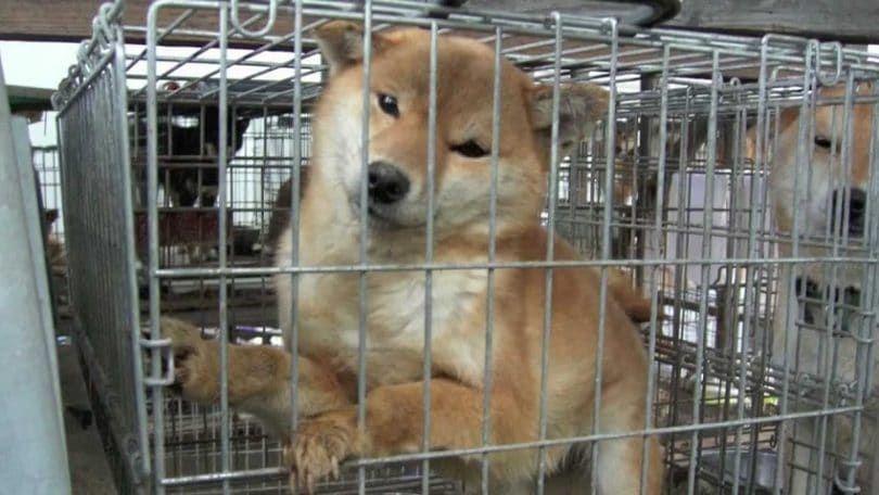 cruauté Dog par des magasins pour animaux de compagnie
