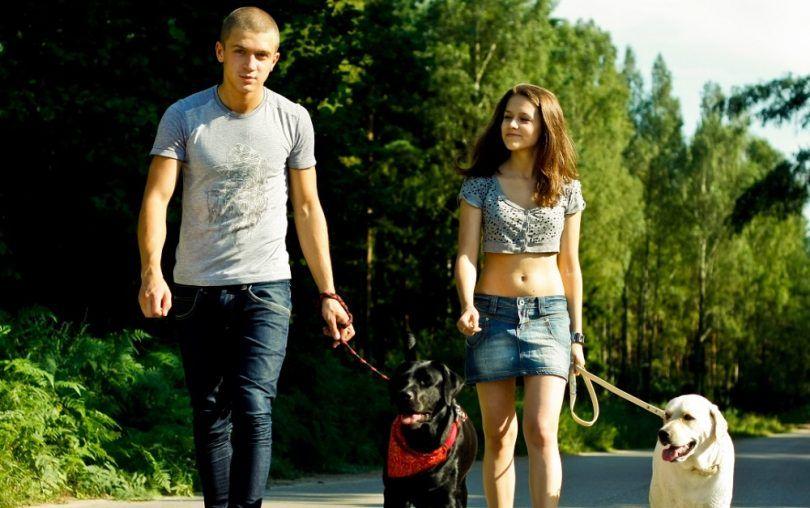 la garde du chien: quoi faire avec fido quand les choses tombent en morceaux
