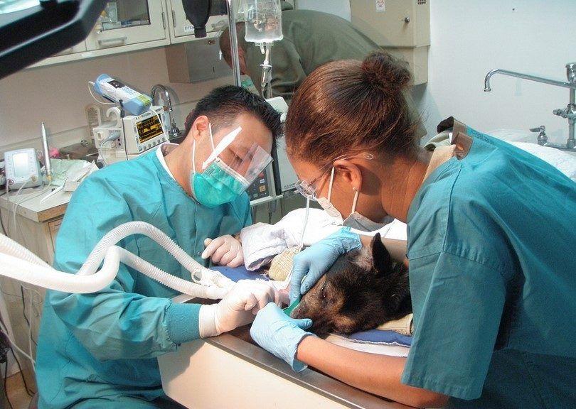 Chien couché chez le dentiste