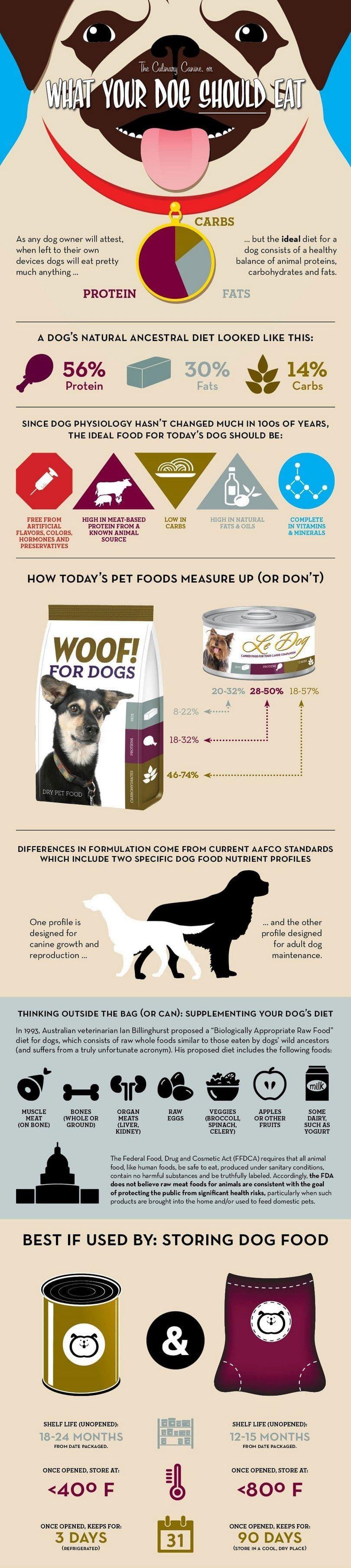 Qu`est-ce que votre chien doit manger infographique