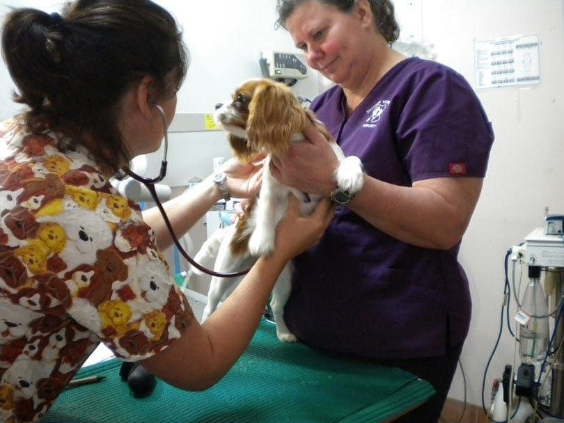 Dog check up