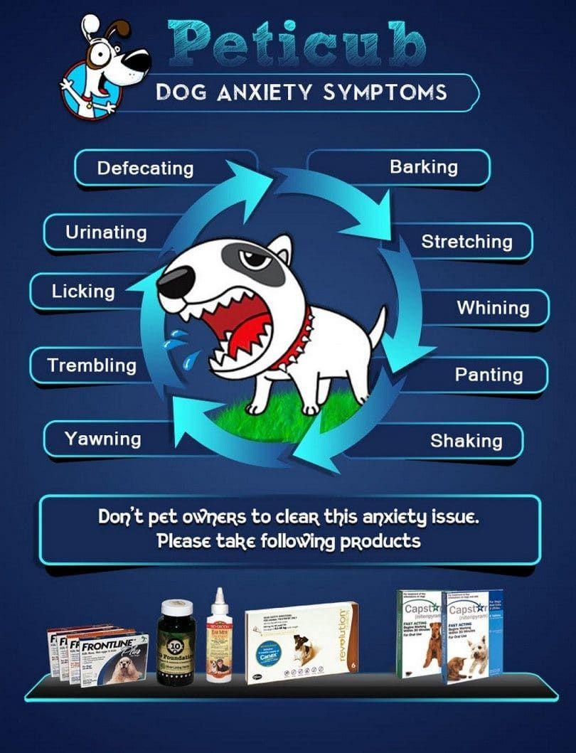anxiété Dog