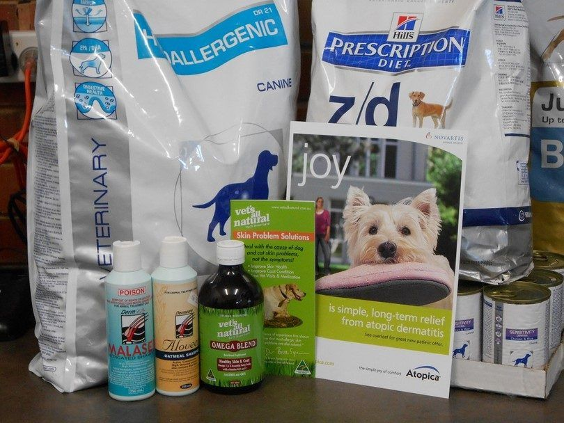 Les traitements pour chien