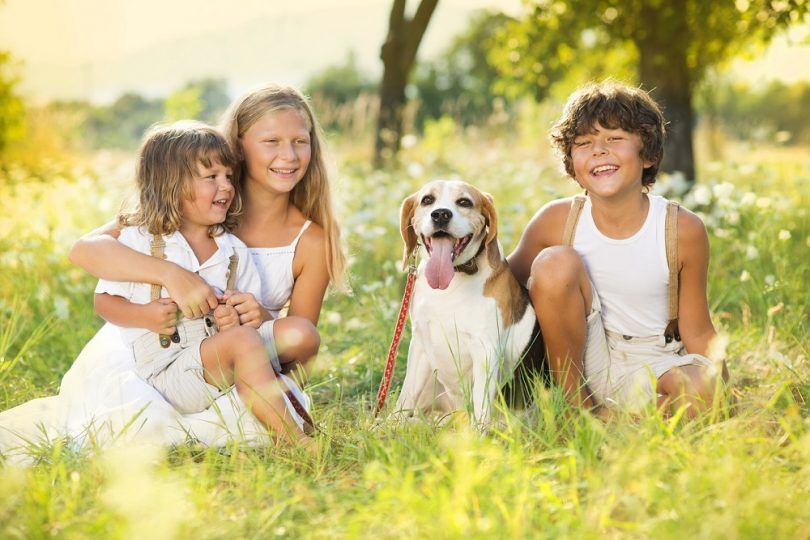 faits de chiens pour les enfants: enseigner les petits à être amical