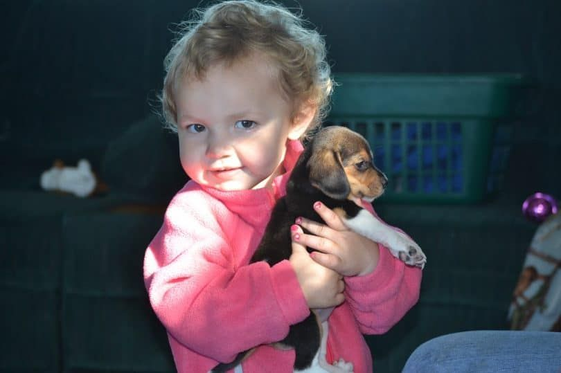 Kid tenant un Beagle