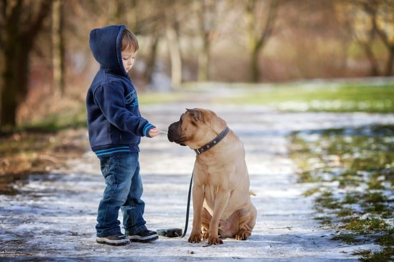 Petit garçon avec son chien dans le parc en lui donnant à manger