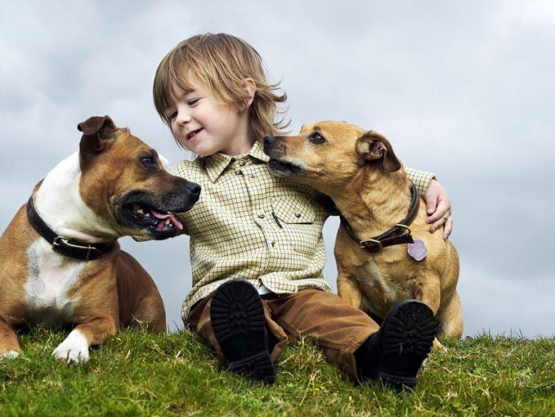 Kid et deux chiens