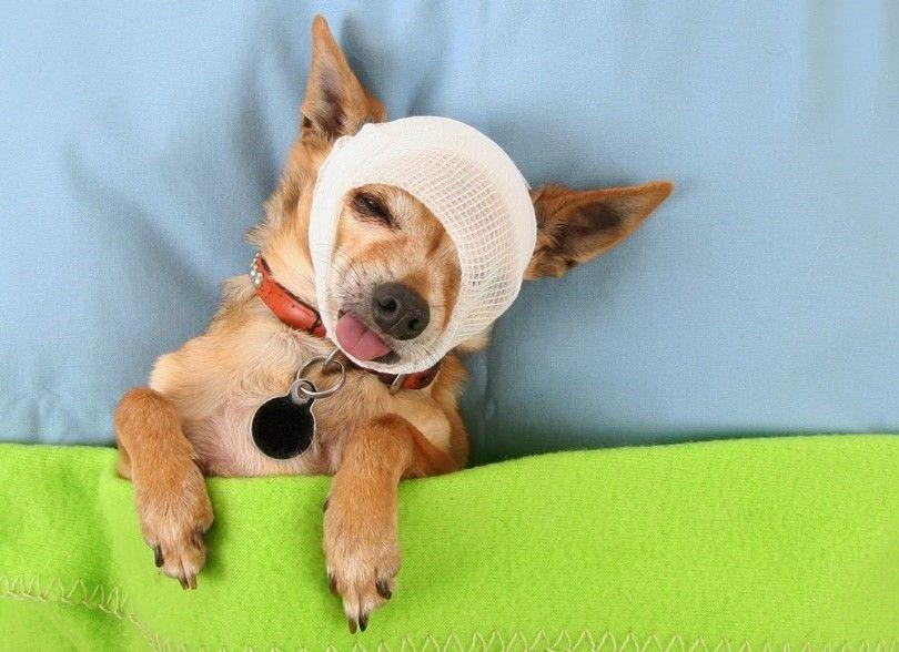 Chien premier guide d`aide pour les propriétaires d`animaux