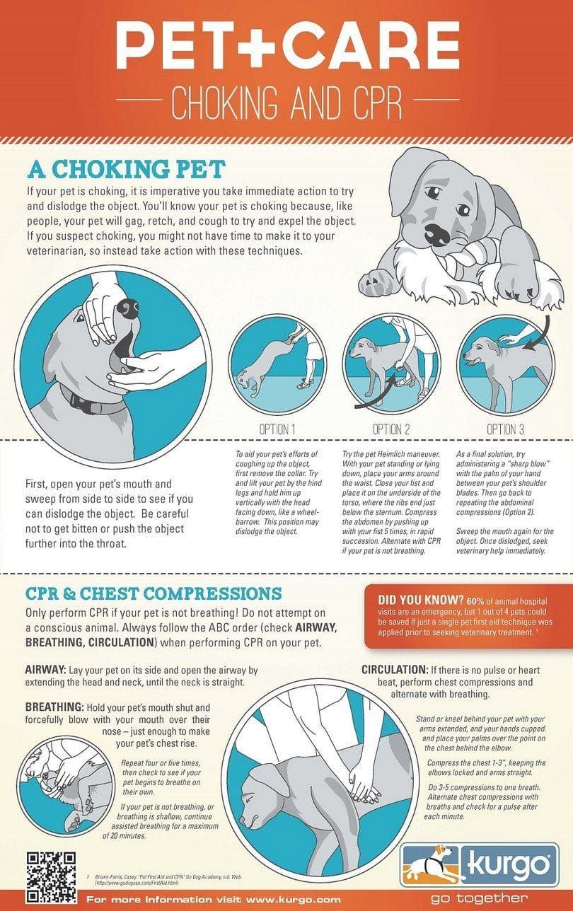 Dog cpr infographique