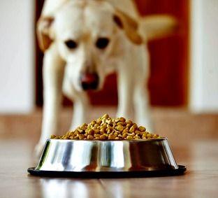 Le choix d`un aliment nutritionnellement chien équilibré