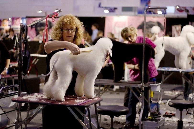 Toilettage salon pour les chiens