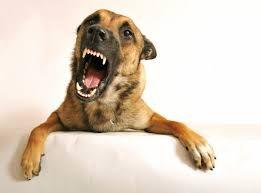 Dog grogner propriétaire, bébé, à rien dans le sommeil, à d`autres chiens provoque et comment arrêter