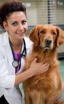 heartworm Dog: quel est-il et pourquoi devrais-je l`empêcher?