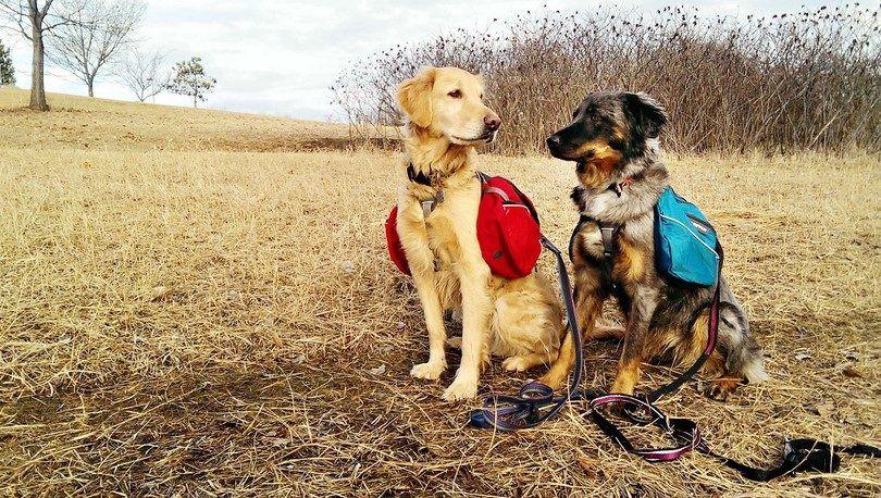Chien équipement de randonnée: un guide pour la randonnée avec votre chien