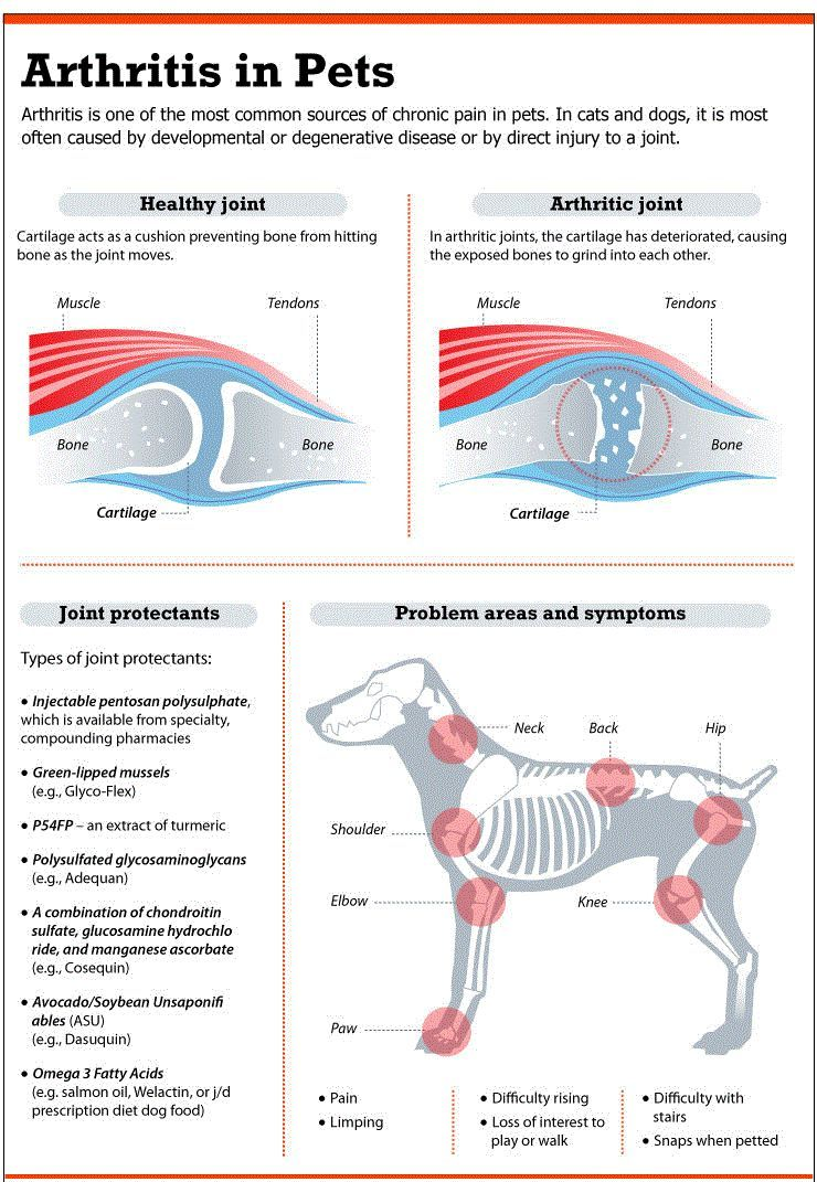Chien douleur de la hanche: comment les problèmes articulaires affectent le meilleur ami de l`homme