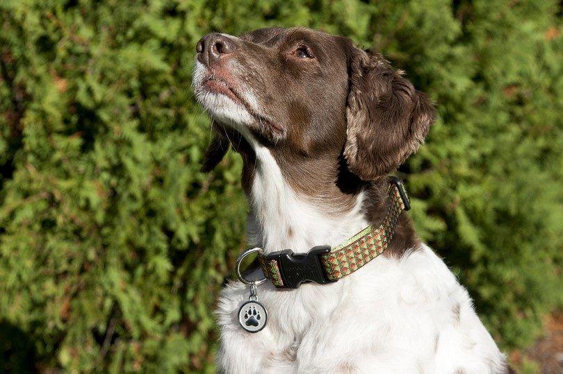 identification Dog Tags: Guide d`un chien propriétaire