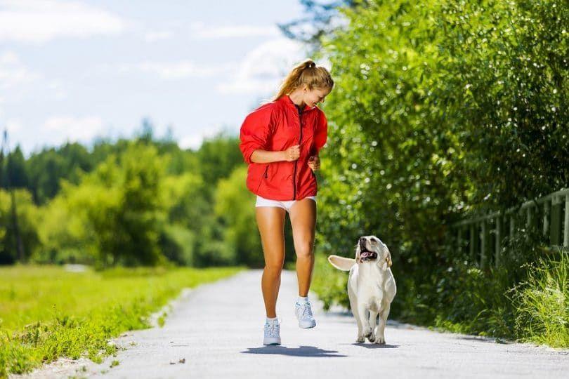 Bon exercice pour chien