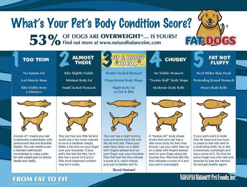 Chien`s body conditioning chart
