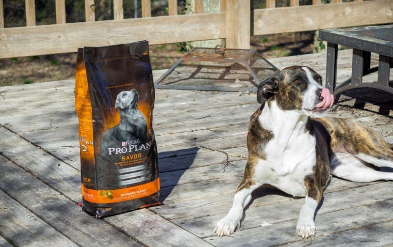 Dog Purina Pro Plan Croquettes