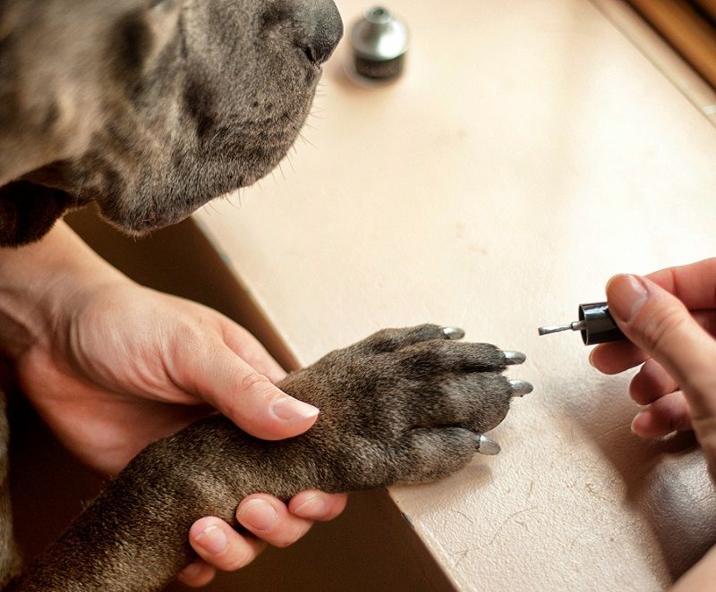 Coloriage ongles pour chiens