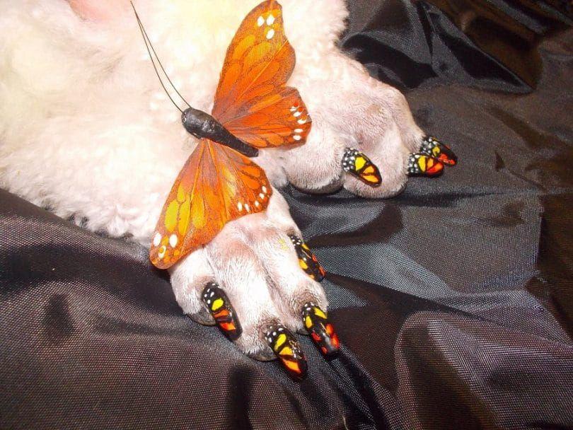 Fabriqué avec Warren London pawdicure stylo à ongles pour les chiens