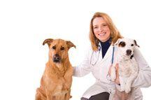 neutering Dog - Guide d`un propriétaire