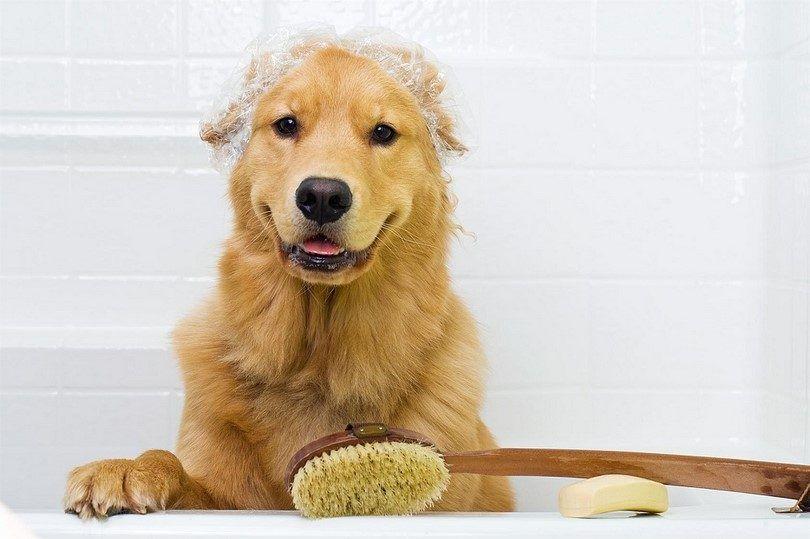 bain de chien de prévention