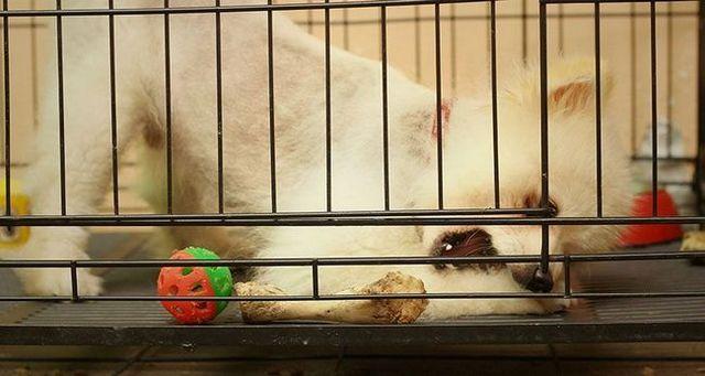 problème de chien: chiot caisse salissure
