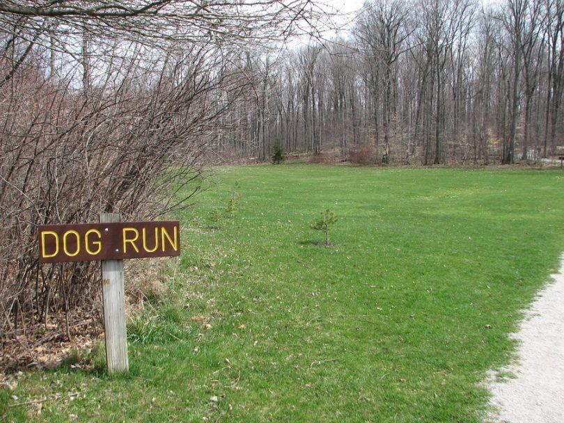 Dog idées courir: améliorer le temps de votre chien pendant que dans la course