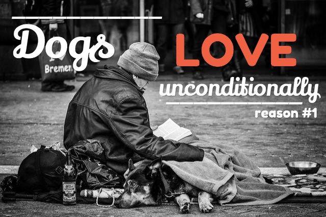 Dog dictons: 15 raisons pour lesquelles nous aimons les chiens