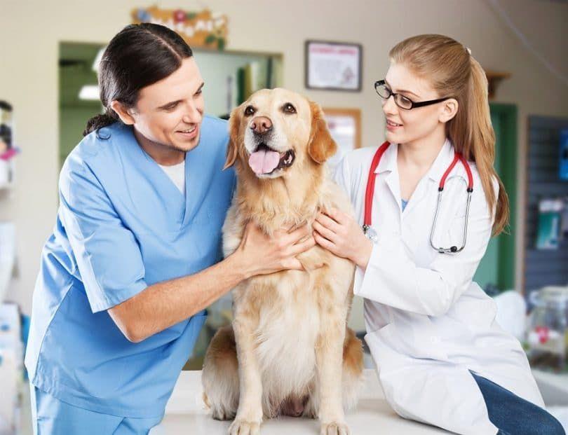 chien sain chien heureux