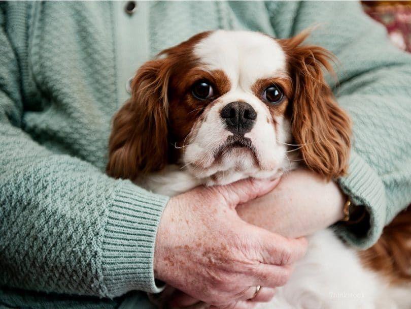 néoplasmes de la peau chez les chiens