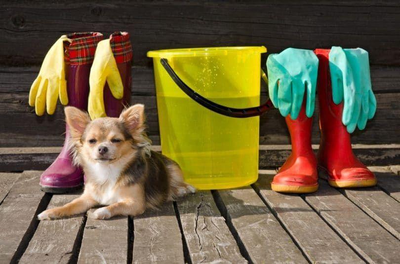 Nettoyage environnement de chien