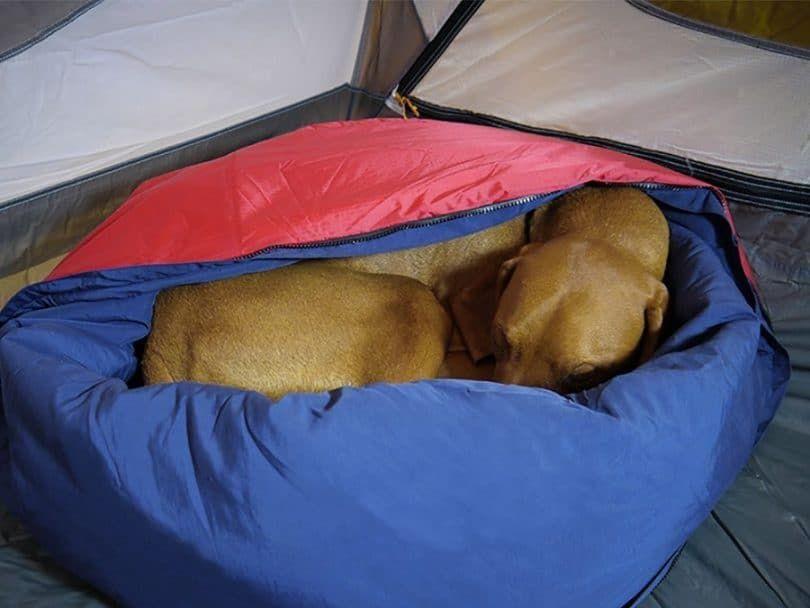 Noblecamper 2-in-1 lit pour chien et sac de couchage
