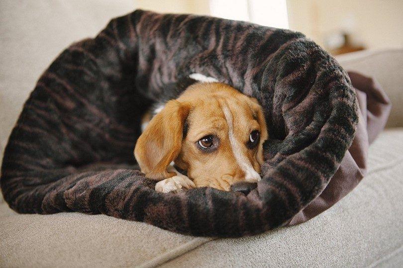 JOUER. Pet Lifestyle et vous Snuggle Bed