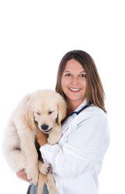 spaying Dog - Guide d`un propriétaire