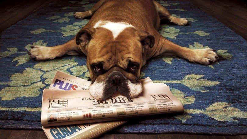 Chien de stress: les signes qui vous indiquent Buster est une épave nerveuse