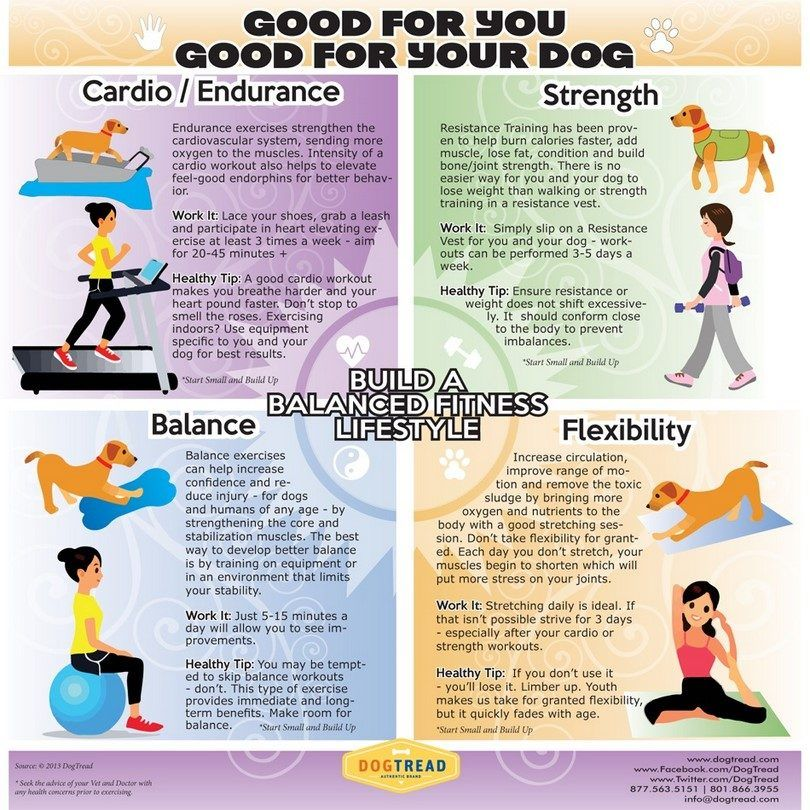 Exercice pour votre chien