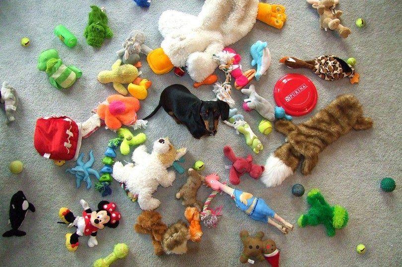 jouets pour chiens pour les garder occupés: garder votre chien amusé quand vous n`êtes pas autour de