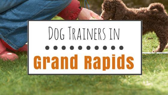 Chien de formation à Grand Rapids, MI: 9 options de formation positives