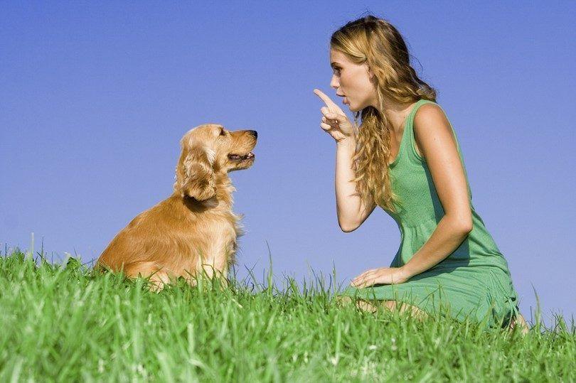 techniques de dressage de chiens: méthodes à considérer pour une bonne formation