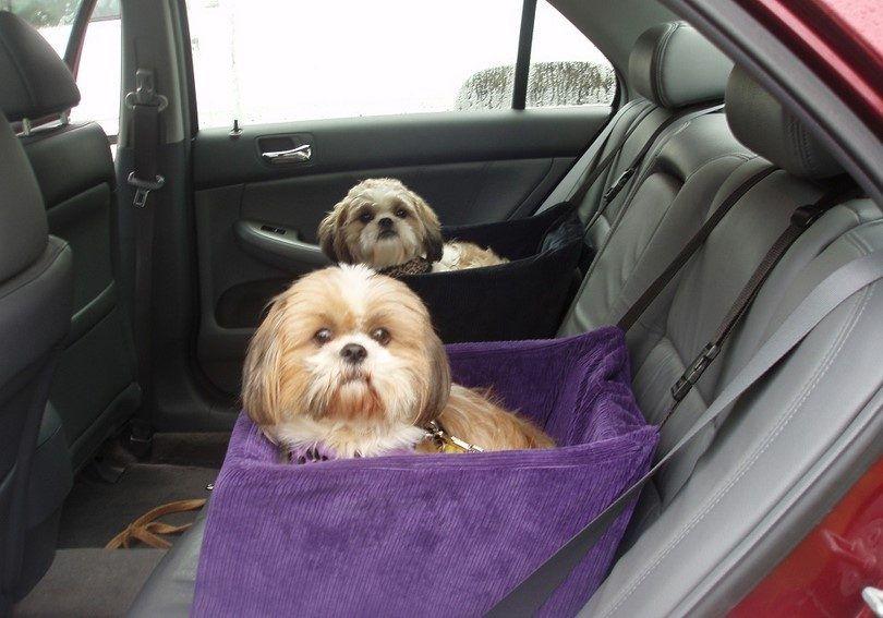 Les chiens long voyage