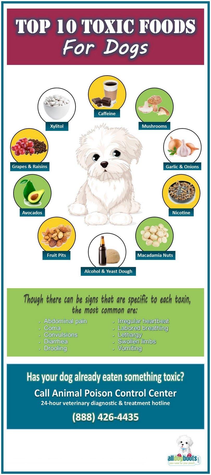 aliments toxiques chiens