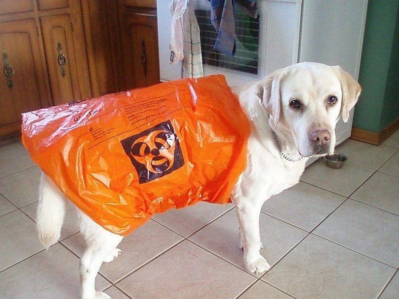 Chien vomissements: symptômes et des conseils sur la façon de traiter votre animal de compagnie