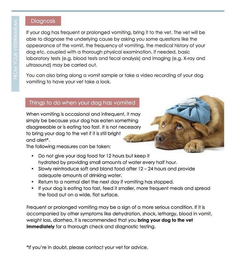 Vomissements chez les chiens infogrpahic deux