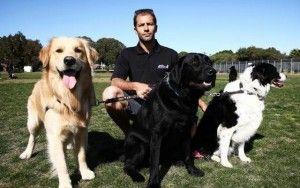 Promeneurs pour chiens en Australie sont furieux propos Nouveaux règlements