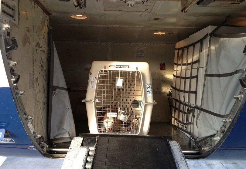 Chien dans la cargaison d`un avion