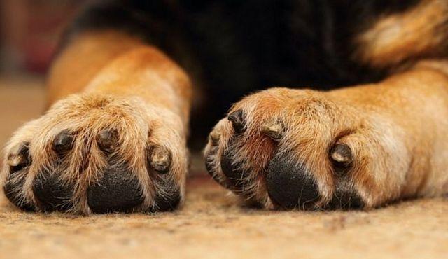 (Ne pas) lui donner un coup de main: comment empêcher votre chien de piaffe